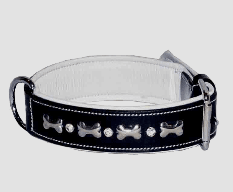 leather_dog_collar_with_bone_studs_accent_9818